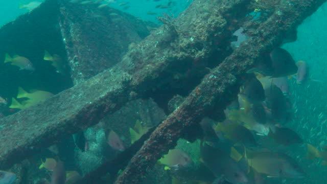 fish forage around a shipwreck. - futter suchen stock-videos und b-roll-filmmaterial