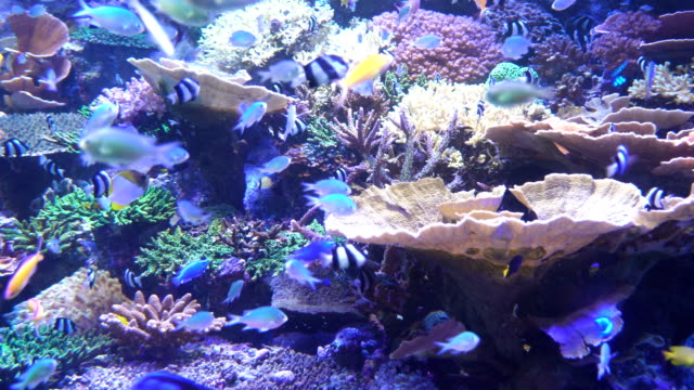 fish group living in coral to that is sea life under backlight - storage tank stock videos & royalty-free footage