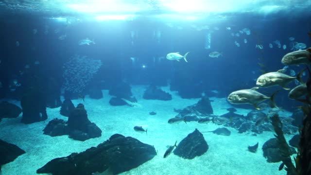fish in a big blue aquarium - aquarium stock videos & royalty-free footage