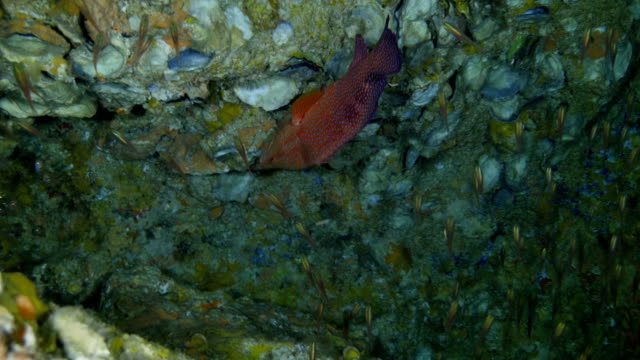Fish in a crevice