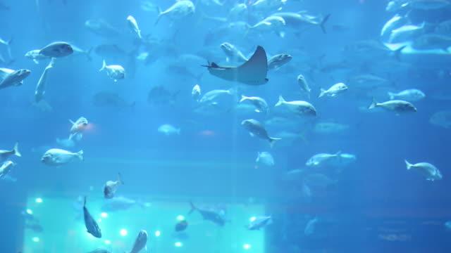 fish in aquarium - dubai mall - salt water fish stock videos & royalty-free footage