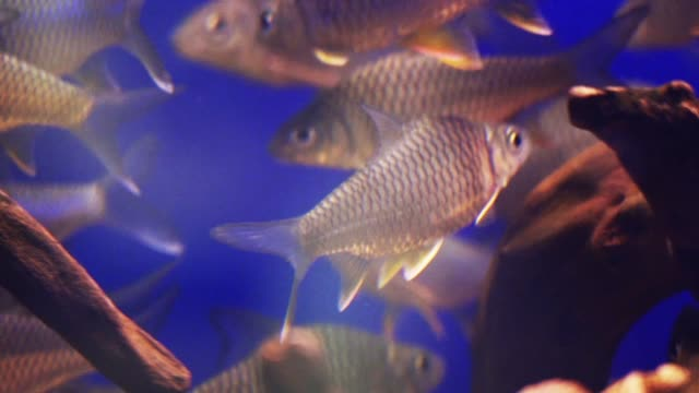 fish in aquarium - zoology stock videos & royalty-free footage