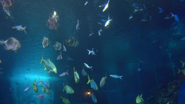 fish in aquarium - 水族館点の映像素材/bロール