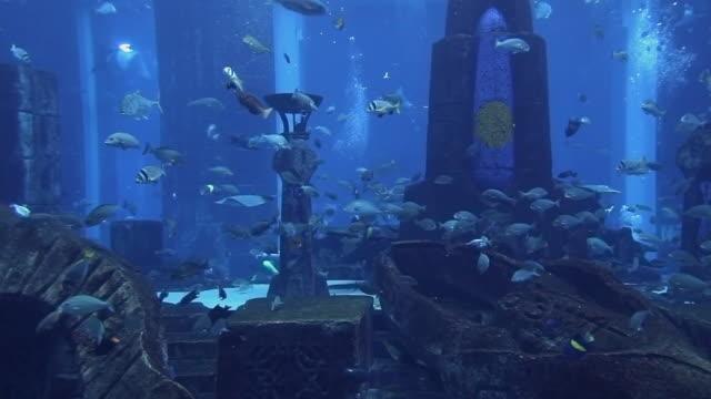 WS Fish in Atlantis Aquarium / Dubai, United Arab Emirates