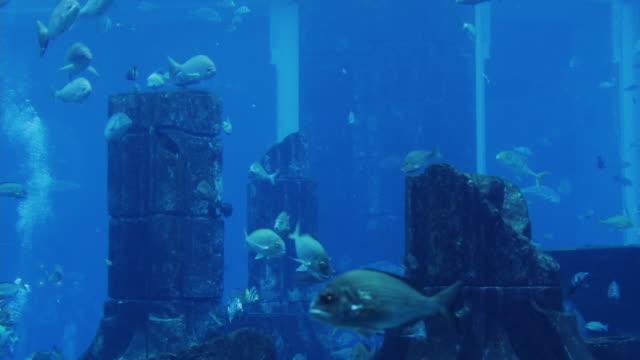 T/L WS ZO Fish in Atlantis Aquarium / Dubai, United Arab Emirates