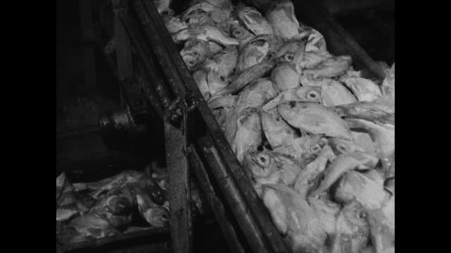fish in conveyor trough male hand filleting fish pushing away rest of body female hands boxing up fish filets cu box ' - perch fish stock videos and b-roll footage