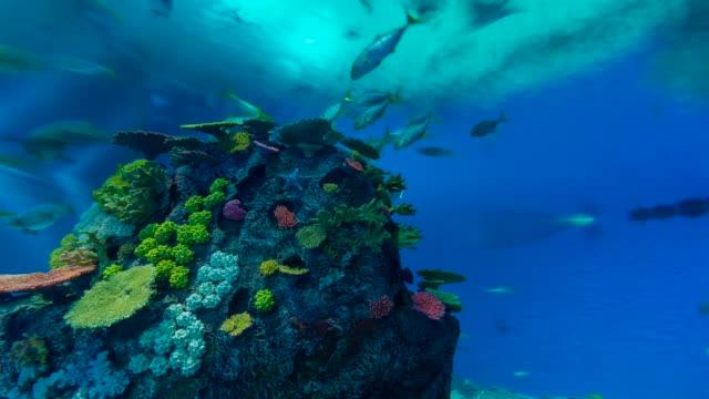 t/l fish in den ba planet aquarium - aquarium stock videos & royalty-free footage