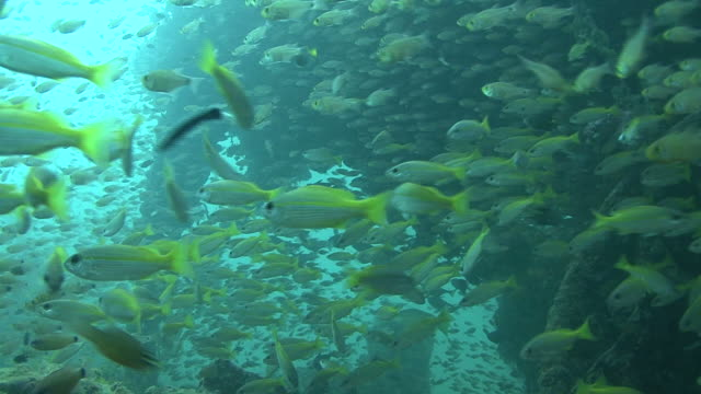 fish in engine room of wreck. thailand - wrack stock-videos und b-roll-filmmaterial