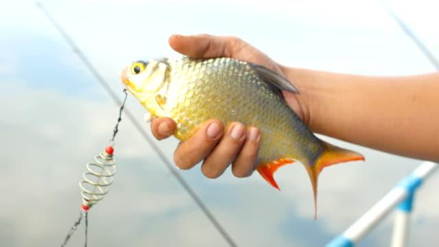 Fish in Fisherman Hand, Fishing