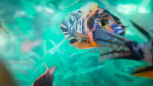 ガラス魚タンクの魚 - グラスフィッシュ点の映像素材/bロール