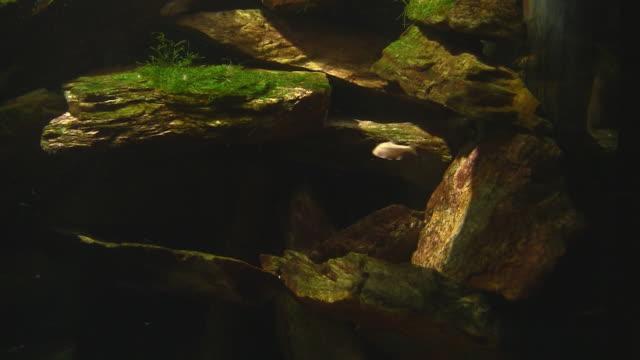 fish in large aquarium