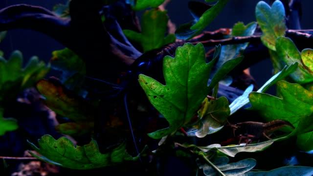 fisch in einem großen aquarium - tier in gefangenschaft stock-videos und b-roll-filmmaterial