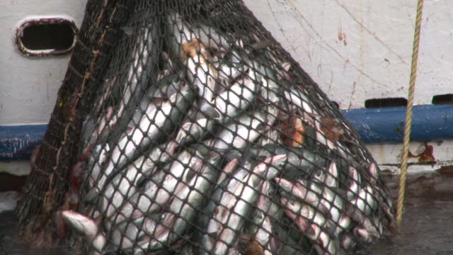fish in net - fishing stock videos & royalty-free footage