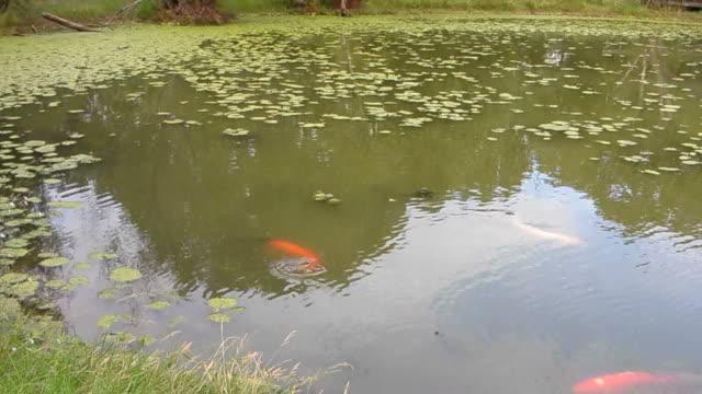 vídeos de stock, filmes e b-roll de pesca em lago - grupo mediano de animales