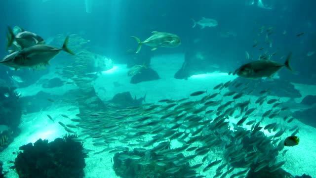 vídeos de stock, filmes e b-roll de peixes no mar - peixe