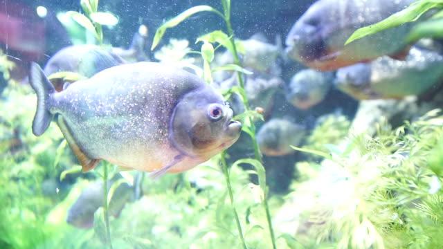fish in the aquarium - distillery still stock videos & royalty-free footage