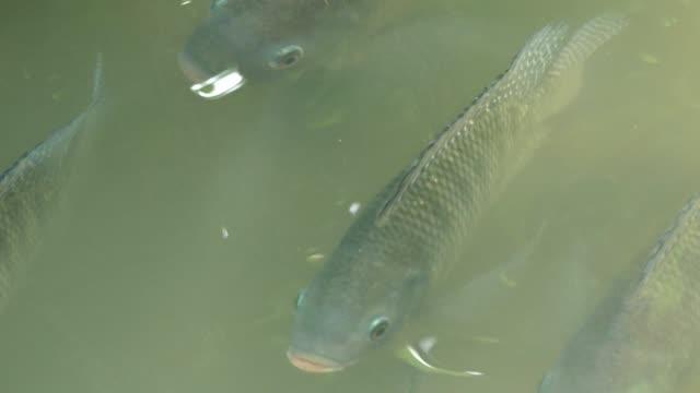 fish in the park, bangkok - mezzogiorno video stock e b–roll