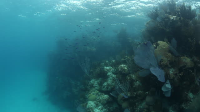 POV, fish in tropical reef environment