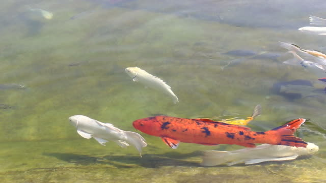 魚の禅ガーデン