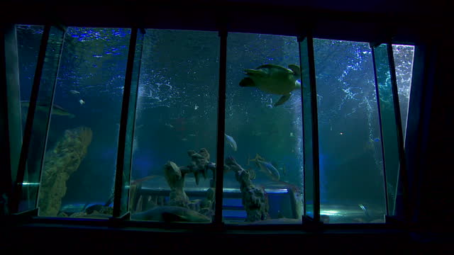 fish inside aquarium and sea life centre in blackpool on the day they reopen as coronavirus restrictions ease - sea life stock videos & royalty-free footage