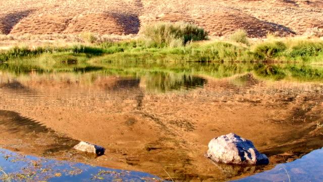 vídeos de stock, filmes e b-roll de fish jump water reflection desert hill dawn john day river cottonwood canyon oregon 41 - cottonwood canyon