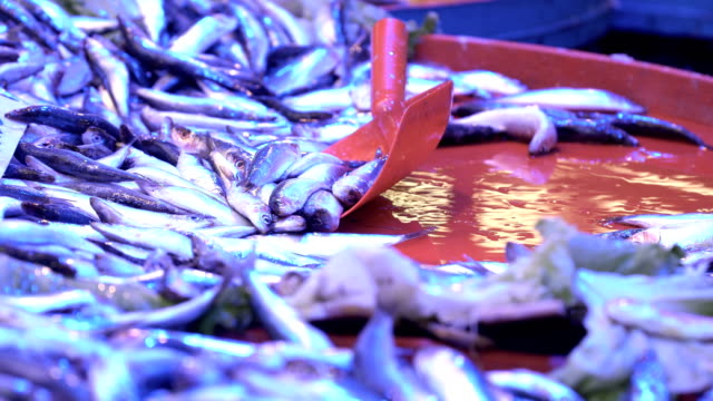 fish market - anchovy stock videos & royalty-free footage