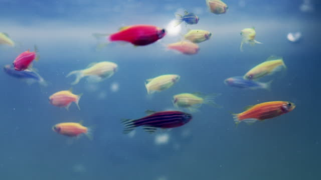 fish of all shapes and sizes - variation stock videos & royalty-free footage