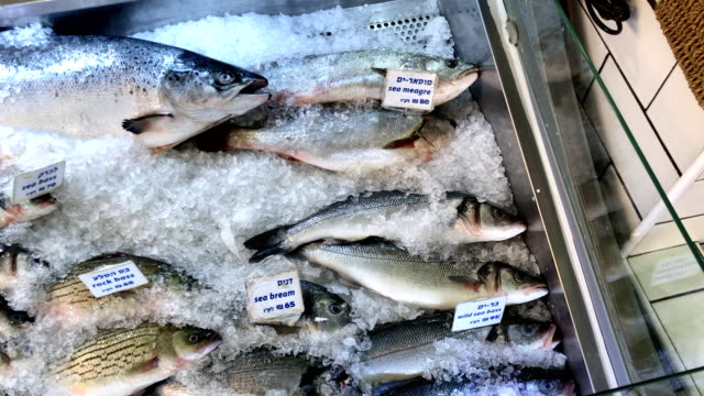 fish on ice in display at the shuk. - proteina video stock e b–roll