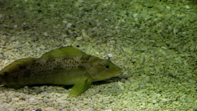 fish on the bottom 2 - hd 30p - liten djurflock bildbanksvideor och videomaterial från bakom kulisserna