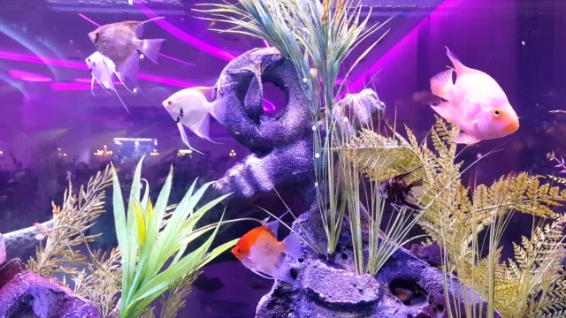 fish on the large aquarium - reef stock videos & royalty-free footage