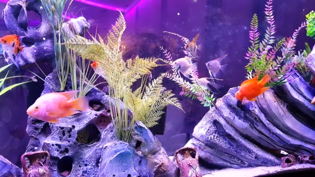 fish on the large aquarium - saltwater fish stock videos & royalty-free footage