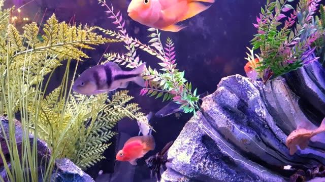 Fisch auf dem großen Aquarium
