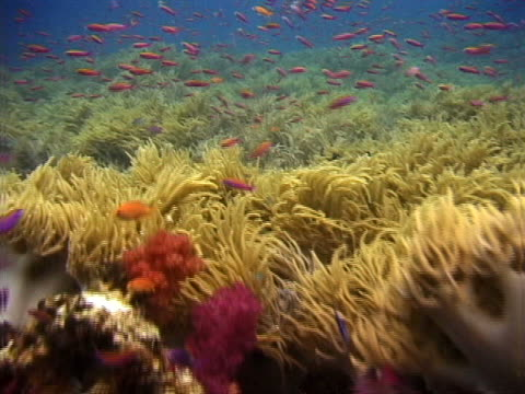 fish over corals and anemones - tierisches exoskelett stock-videos und b-roll-filmmaterial