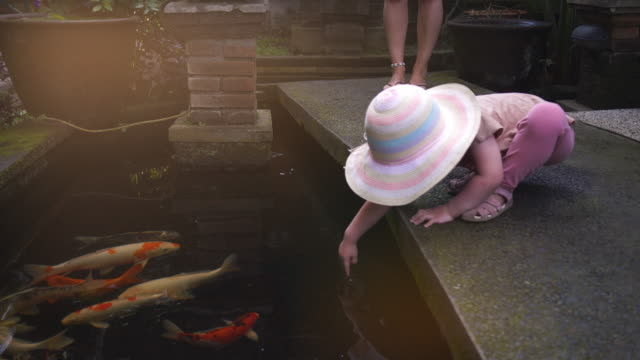 fish pond - pond stock videos & royalty-free footage