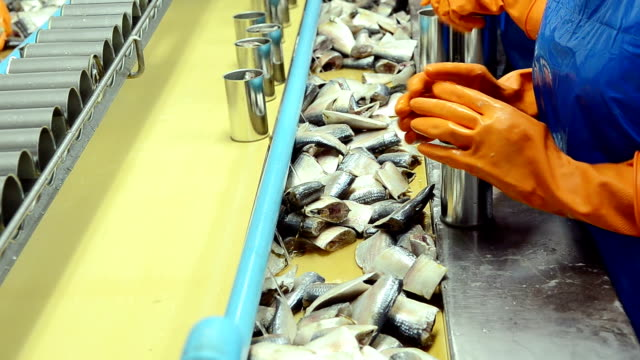 fish process in factory - food processing plant stock videos & royalty-free footage