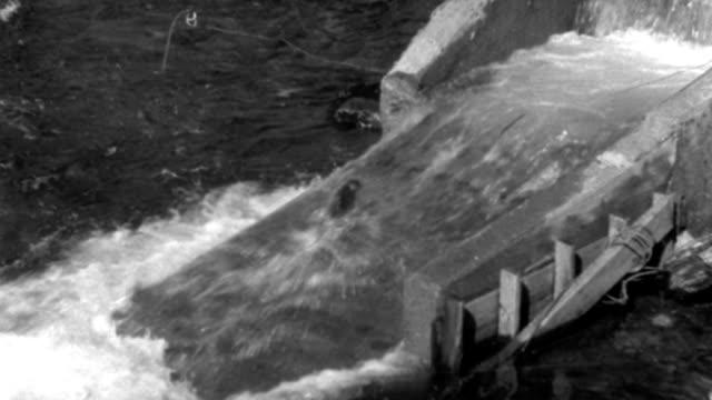 dx - fish - salmon up elevator - c.v. down on salmon elevator - salmon jumping - b&w. - fish stock videos & royalty-free footage