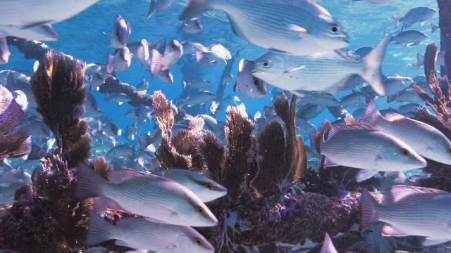 Fish School Under Lighthouse Slow Motion