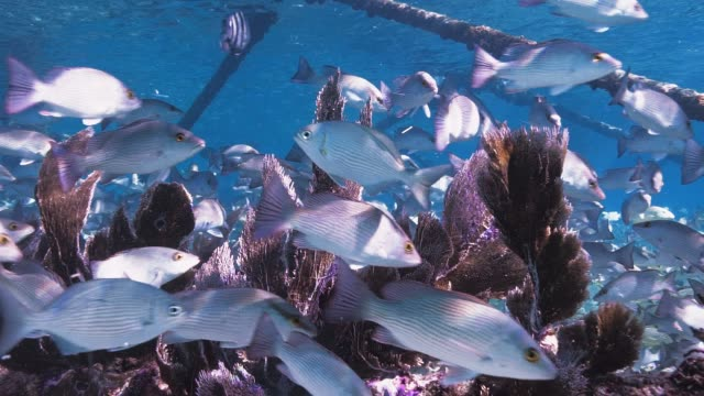 fish school under lighthouse slow motion - snapper fish stock videos & royalty-free footage