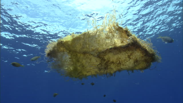 fish shelter under floating sack at surface of pacific ocean, hawaii - pazifik stock-videos und b-roll-filmmaterial