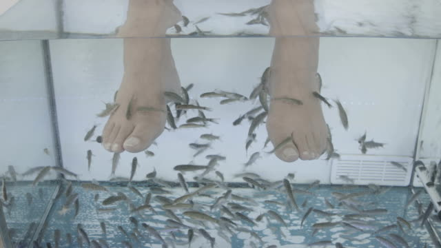 fish spa pedicure - pedicure stock videos & royalty-free footage