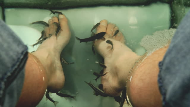 fish spa treatment and pedicure. rufa garra fish nibble dead skin off a man's feet - pedicure stock videos & royalty-free footage