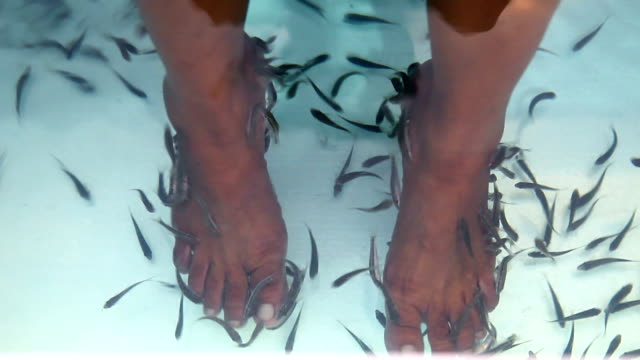 fish spa - pedicure stock videos & royalty-free footage