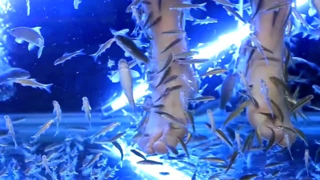 fish spa - brustwarze stock-videos und b-roll-filmmaterial