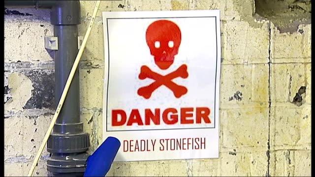 Stonefish arrive at the London Aquarium ENGLAND London London Aquarium EXT Poster reading 'Danger Deadly Stonefish'