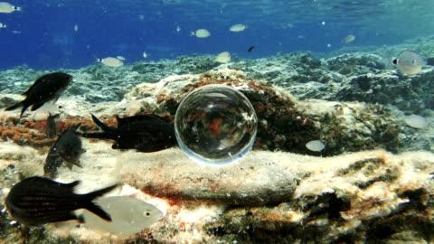 vídeos y material grabado en eventos de stock de pescado, sorprendidos por la bola de cristal - pelota