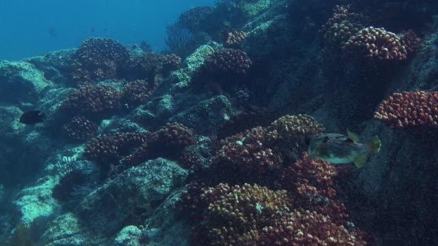 fish swim along a rocky seabed. - futter suchen stock-videos und b-roll-filmmaterial