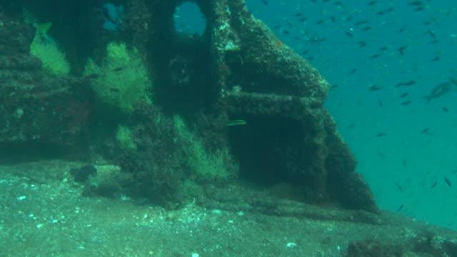 fish swim along a sun-dappled seabed. - dappled light stock videos and b-roll footage