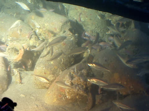 vídeos y material grabado en eventos de stock de fish swim among antique amphoras in the mediterranean sea. - lecho del mar