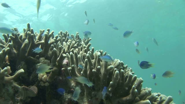 stockvideo's en b-roll-footage met fish swim around a coral in jellyfish lake. available in hd. - ongewerveld dier