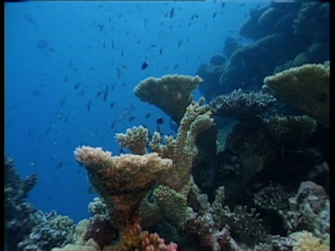 fish swim around a coral reef. - 水生植物点の映像素材/bロール
